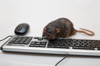 Black computer rat