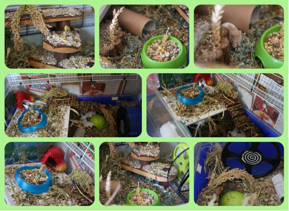 habitatcollage