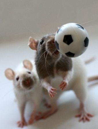 rat ball